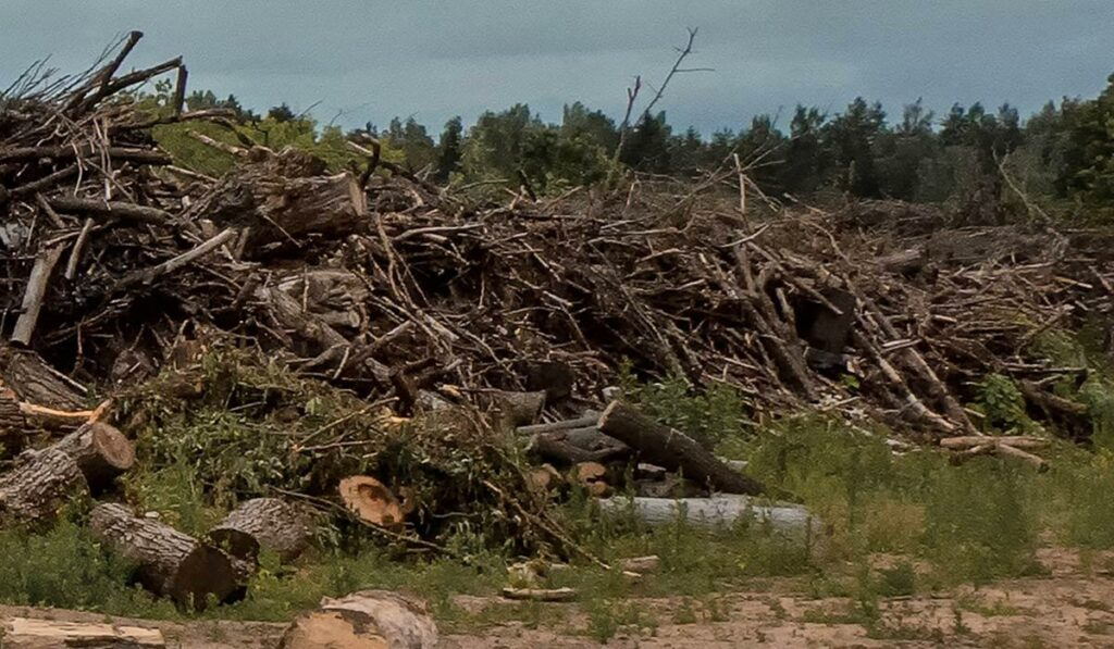 Grot - rishögar efter skogsavverkning